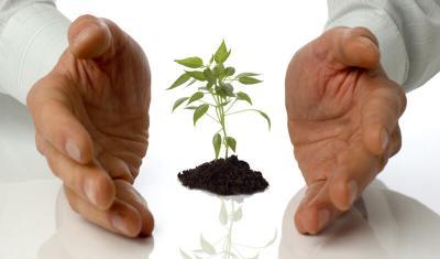 Ayudas municipales para empresas y entidades privadas
