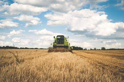 Ayuda a la primera instalación de jóvenes agricultores, Navarra